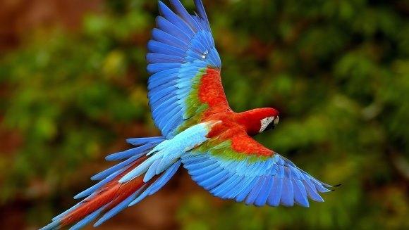Top 4 cele mai inteligente păsări de companie