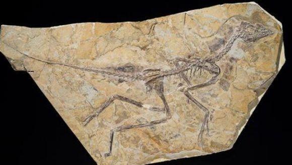 Dinozaurii încă există pe acest pământ