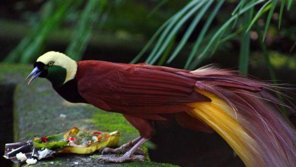 Cele mai frumoase păsări din lume