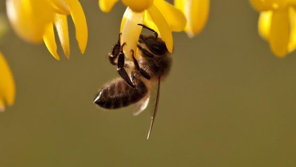 6 lucruri fascinante despre albine