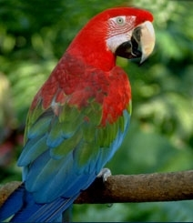 Semnificatia tipetelor papagalului