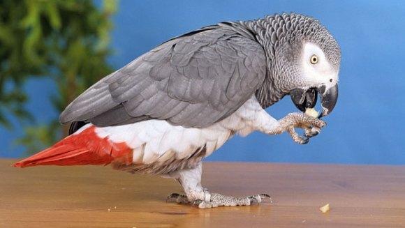 Un papagal ce vorbea engleză s-a întors după patru ani la stăpânul lui, vorbind spaniolă
