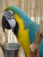 Diversitatea, cheia unei alimentatii sanatoase la papagali