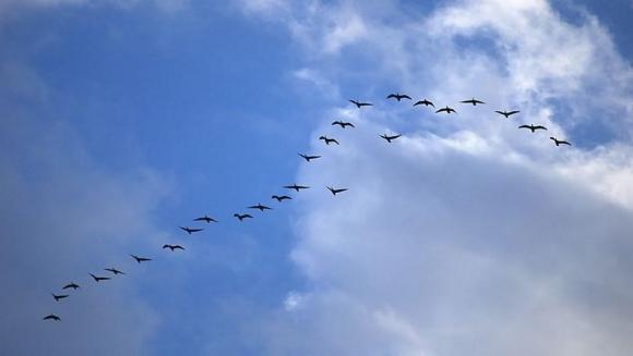 Efectele schimbărilor climatice asupra păsărilor