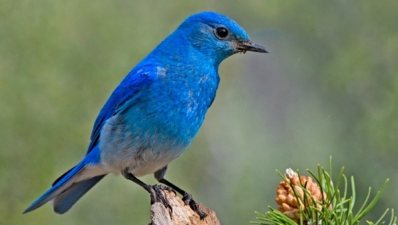 Una din cinci specii de păsări din Europa este ameninţată cu dispariţia