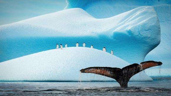 15 fotografii care vă vor convinge să iubiţi nespus pinguinii