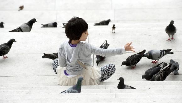 Studiu: Păsările de la oraș sunt mai istețe decât cele de la țară