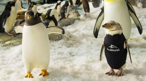 Un pinguin fără pene de la un parc acvatic a cucerit publicul cu un costum special, de iarnă - VIDEO