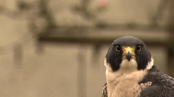 Ornitofobia – ce este teama de păsări şi cum poate fi ea vindecată