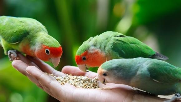 Cinci alimente pe care papagalul tău trebuie să le încerce