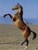 Un milion de lire sterline pentru protectia cailor