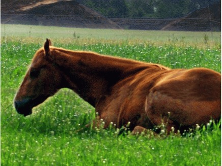 Artroza la cai