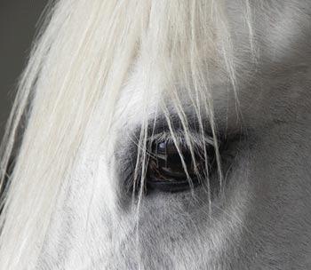 Orbirea la cai