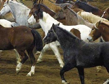 Igiena cailor reproducatori