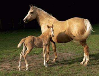 Sterilitatea la cai