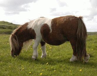 Nutritia poneiului