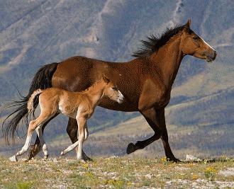 Tetanosul la cai