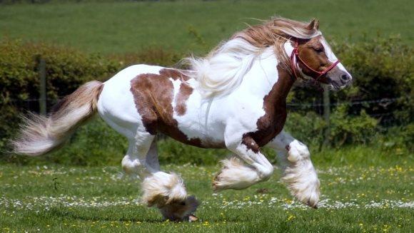 Achiziţionarea unui ponei: ce trebuie să ştii înainte