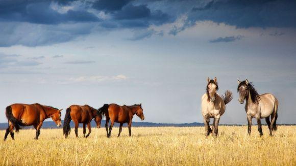 7 lucruri fascinante pe care nu le ştiaţi despre cai