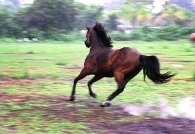 Acest doctor care este calul