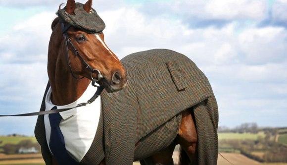 Primul cal din lume care poartă costum creat de designer arată superb - Galerie Foto