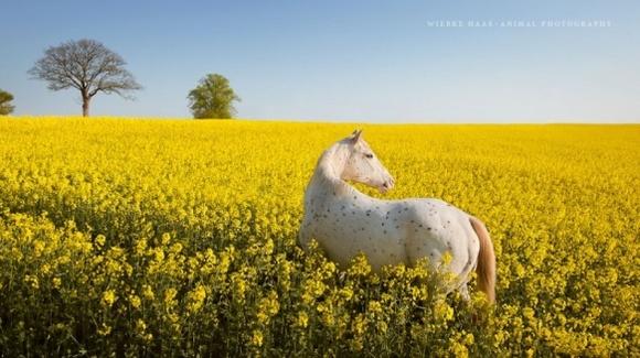 Cei mai frumoși cai din lume – 16 fotografii care vă vor convinge de grandoarea cabalinelor - Galerie Foto