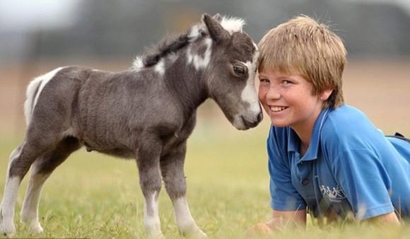 Descoperă cei mai frumoși mini-cai din lume. Sunt mai drăgălași decât jucăriile de pluș - Galerie foto
