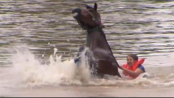 O femeie curajoasă a salvat un cal de la înec – VIDEO