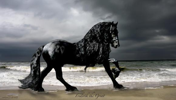 Frederik cel Mare, cel mai frumos cal din lume. Armăsarul este superb (Galerie Foto)