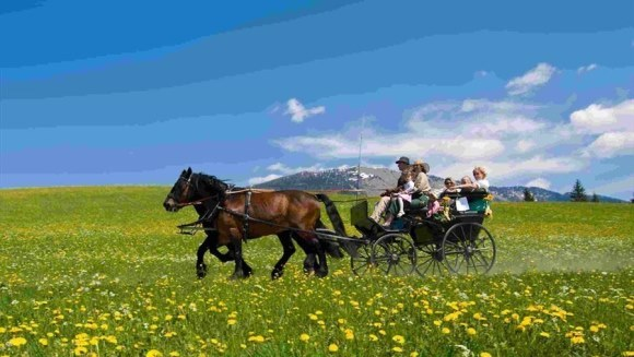Calul Abtenauer – Istoric, caracteristici fizice, îngrijire şi temperament