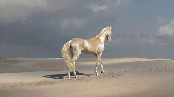 """Raritatea numită de oameni """"Cel mai frumos cal din lume"""" - Galerie Foto"""
