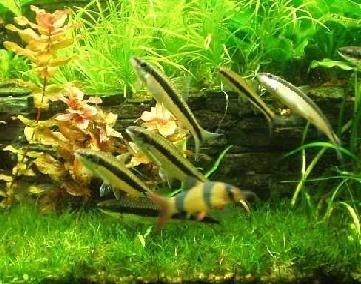 Modalitati de filtrarea apei din acvariu (1)