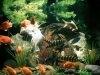 Amenajarea unui acvariu