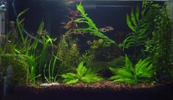 Sfaturi pe pentru ingrijirea unui acvariu