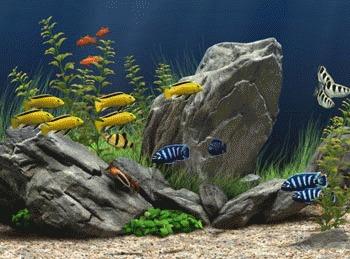 Ciclarea acvariului!