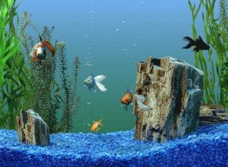 Alegerea filtrului pentru acvariu