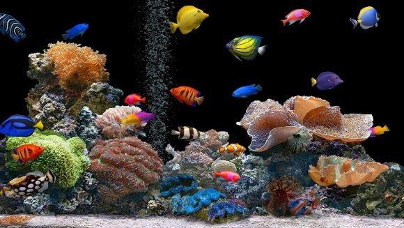 Alegerea plantelor pentru acvariu