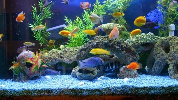 Alegerea încălzitorului pentru acvariu
