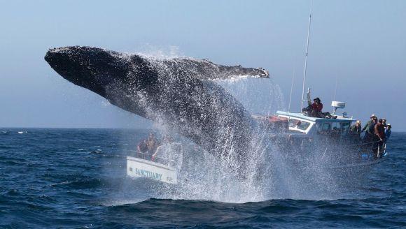 Cu balena la picioare