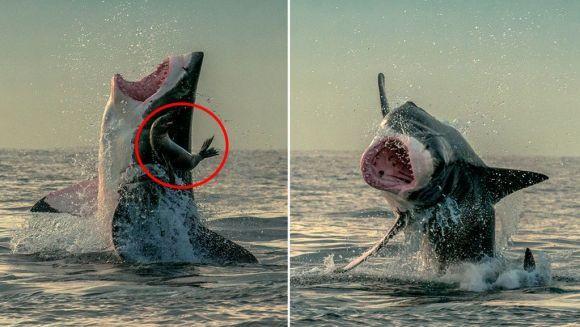 """Fotografie incredibilă: a scăpat de moarte """"la mustaţă"""""""