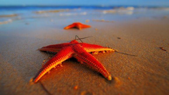 Stelele de mare – prezentare generală și curiozități