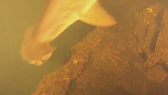 Oamenii de știință sunt șocați: au găsit rechini în apele acide ale unui vulcan
