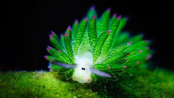 Oi de mare? Cine sunt micuțele creaturi și de ce sunt deosebite - Galerie Foto
