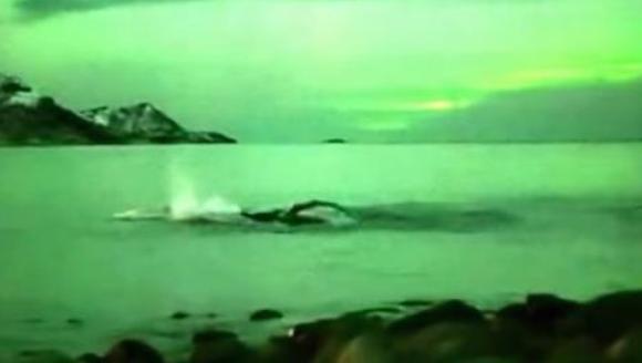 Spectacol impresionant oferit de natură: balene înotând în lumina aurorei boreale – VIDEO