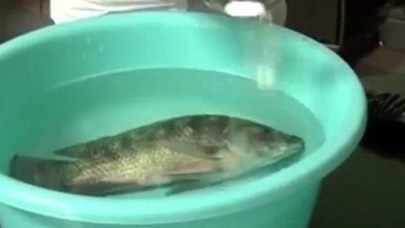Clipul bizar cu peştii care învie a devenit viral – VIDEO