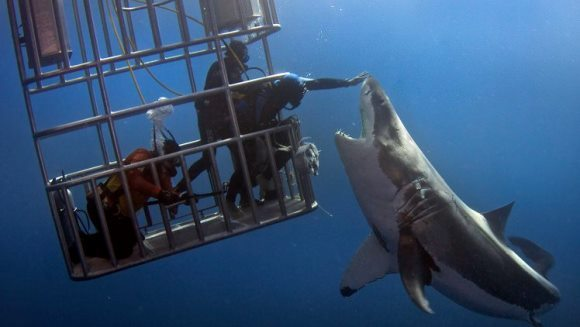 Moment unic în adâncul oceanului: un scafandru a atins pe nas un rechin din specia Marele Alb