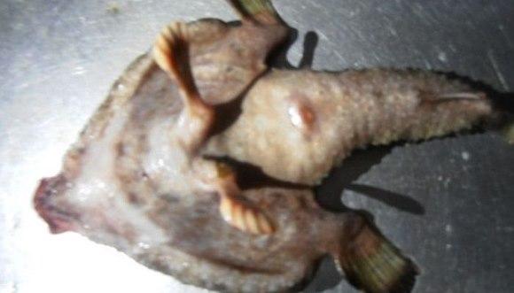 Peştele mutant a înmărmurit pe toată lumea. Cum arată el
