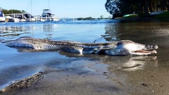 Monstru marin, eşuat pe o plajă din Australia. Despre ce este vorba