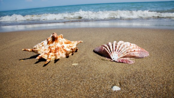 Scoicile din oceane se dizolvă. Care este cauza