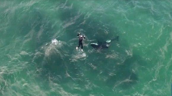 """Un kayaker s-a alăturat unei orci care înota lângă el şi """"s-au unit"""" într-un dans formidabil – VIDEO viral"""